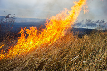 dry grass burns in the steppe. Field, autumn season.