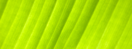 Green palm leaf, close-up. Blurry unfocused photographic effect. Web banner.