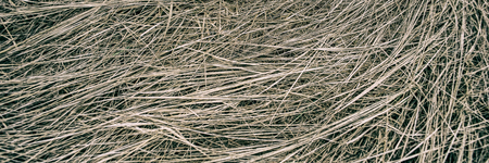dry grass in a meadow on a foggy day, panoramic landscape. Early spring. Web banner for design. Ukraine. Europe. 免版税图像
