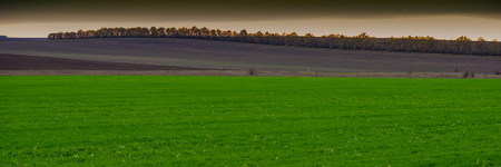Green field of winter wheat against the background of a plowed field in a hilly area, landscape panorama. Autumn season. Web banner.