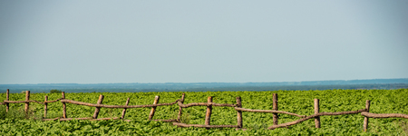 wooden old fence in a field of young sunflowers on a sunny day.Web banner for your design. Banque d'images