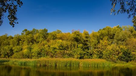 Autumn deciduous forest and river on a sunny day. Amazing landscape. Ukraine. Europe.