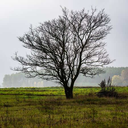 Silhouette of a Lonely Tree on the Background of the Field and the Forest in the Fog. Autumn landscape.