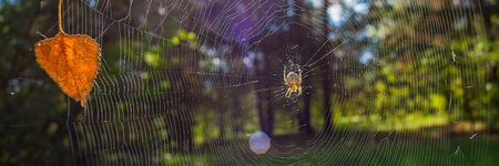 Early Autumn in the Deciduous Forest Spider and Cobweb on Sunny Day. Landscape in the Countryside. Web Banner.