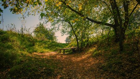 Fallen leaves and an old wooden bench in the park. Autumn Landscape in the Countryside. Stock Photo