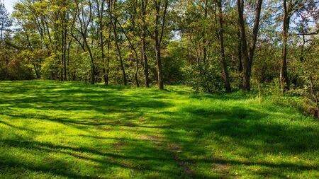 Early Autumn in Deciduous Forest and Lawn with Green Grass. Landscape in the Countryside.
