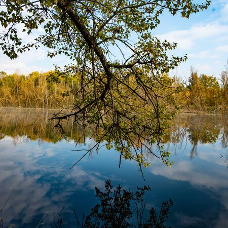 Tree branch over the surface of the water in the river. Autumn landscape. Stock Photo