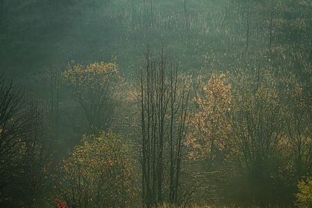 Deciduous forest in a foggy haze on the hillsides. Autumn season in October. Ukraine. Europe. Archivio Fotografico