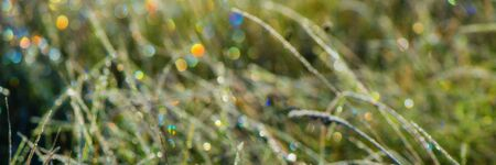 iridescent glare on the grass covered with hoarfrost in the morning on the meadow, blurred background. Autumn season. Ukraine. Europe. Web banner.
