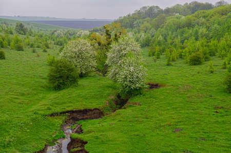 Flowering trees on the hillsides and the formation of a ravine. Soil erosion. Spring season. Ukraine. Europe. Imagens