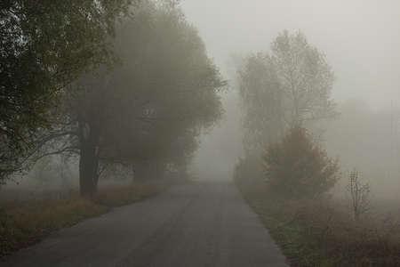 asphalt road against the background of deciduous trees in the fog. Autumn season in the village. Ukraine. Europe.