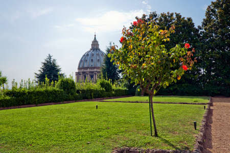 basillica: Beautiful view at the Vatican gardens and St. Peters Basilica in Rome,. Italy Stock Photo