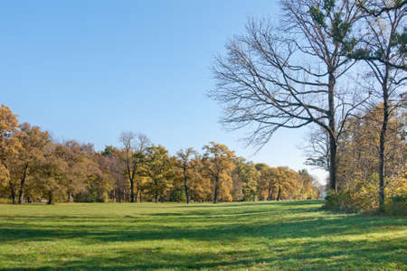 nymphenburg palace: Beautiful green meadow in the autumn park