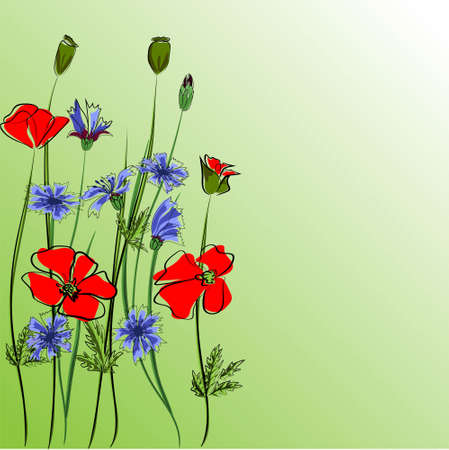 Bouquet with poppies and wildflowers. Vector illustration