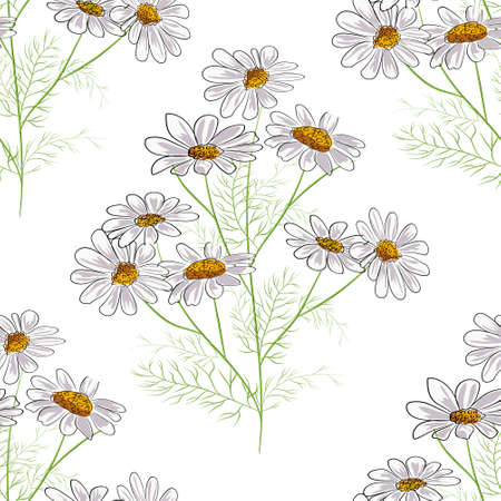 Vector floral seamless pattern with summer yellow herbs and chamomile camomile flowers. Black background