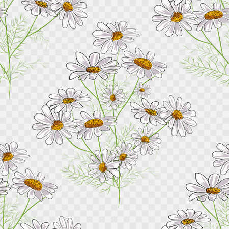 Vector floral seamless pattern with summer yellow herbs and chamomile camomile flowers Çizim