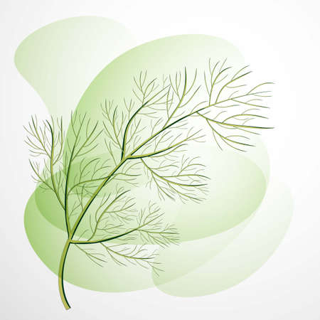 A sprig of dill. Isolated vector illustration. Herbal nature plant. Botanical illustration.