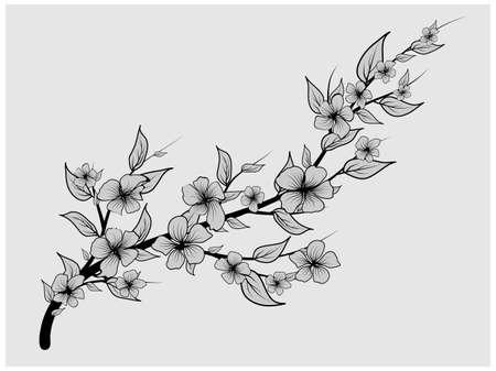 Cherry background. Cherry blossom. Japanese black for decoration design. Spring fashion. Gray background