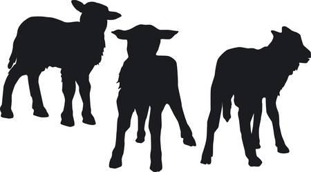 lamb Trio Vector