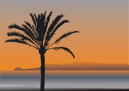 date palm: A palm tree in the evening sun in front of a bay Illustration