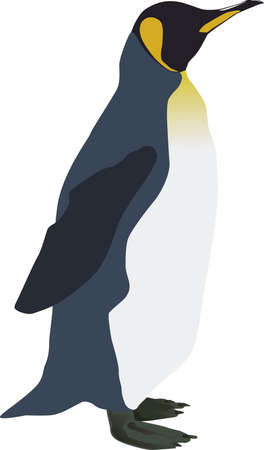 window seal: A handsome emperor penguin in the side view. Ideal as a sign for an ice cream or all the cool shops and types. Illustration