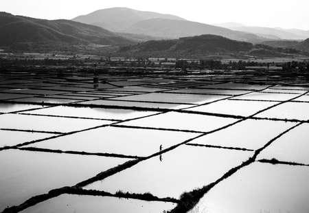 turkey rice fields in Çorum