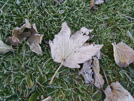 Dead leaves on grass in winter time