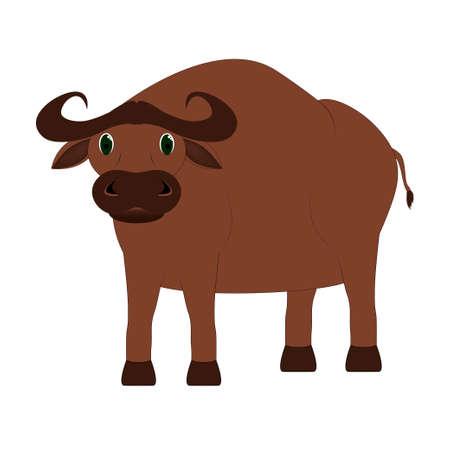 ungulate: buffalo bull standing on a white background
