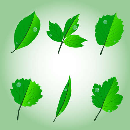 ashes: set of six vector leaves