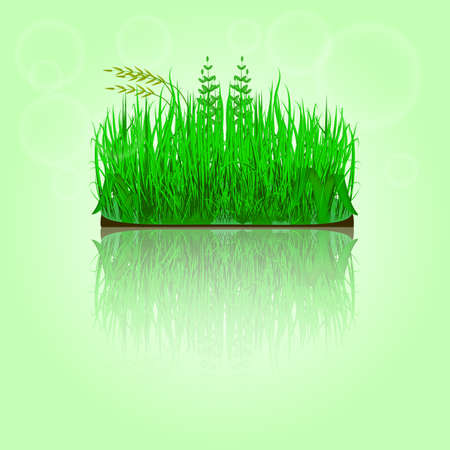 in reflection: Green grass with reflection. Vector
