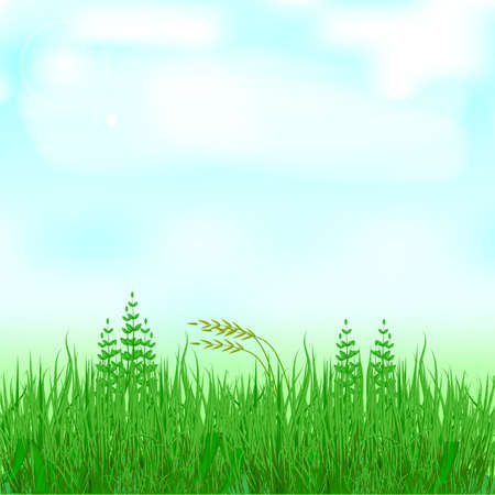 blue sky with clouds: Green Grass And Blue Sky, Vector Illustration