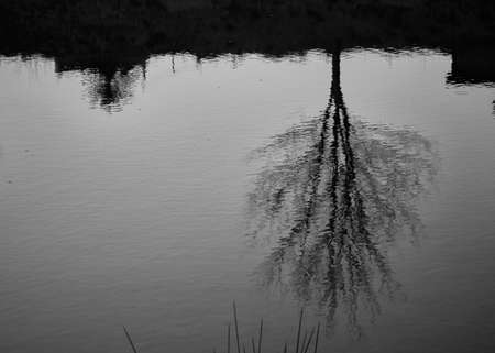 black and white detail of an old tree reflected in the course of a river