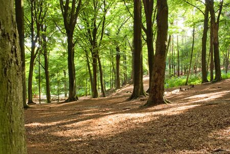 Summer forest background Stock Photo