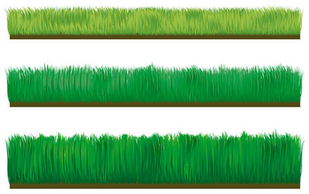 Three types of border grass isolated on white background Vector