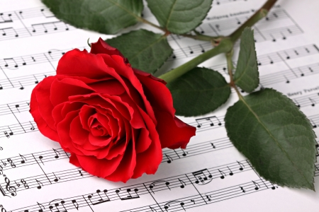 red  green: red rose on music sheet. Stock Photo