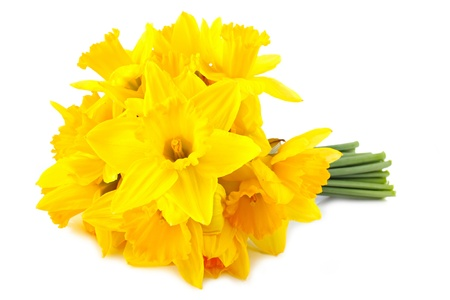 lent: bouquet of yellow lent lily (daffodil) isolated on white background. Stock Photo