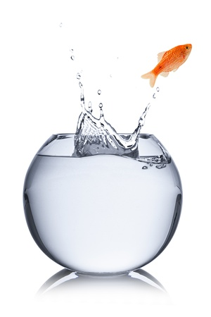 fish jumps out of bowl  photo