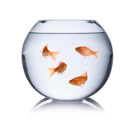 fish family in fishbowl Stock Photo - 19321845