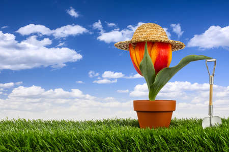 yard work: tulip with straw hat and shovel on gras Stock Photo
