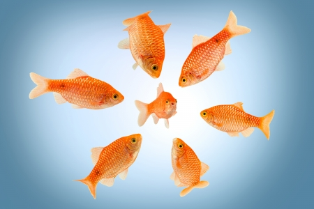 however: a groupe of big fish surrounding a small fish Stock Photo