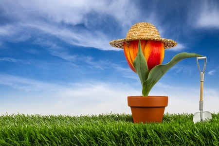 Pflanzen: Tulpe mit Sonnenhut auf Wiese vor blauem Himmel