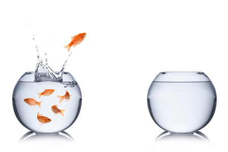 goldfish: fish jumping out into an empty bowl