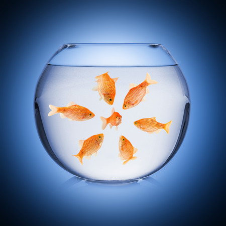 mobbing concept in fish bowl Stock Photo - 26055172