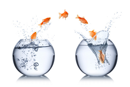 fish change concept Stock Photo - 26584458