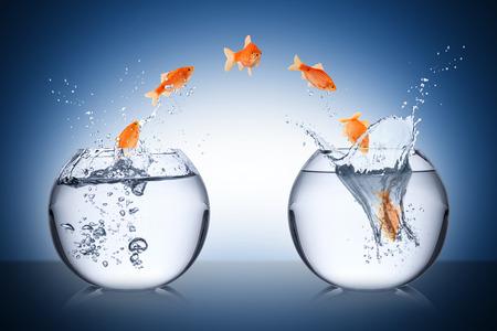 魚の概念を変更します。 写真素材 - 26584460