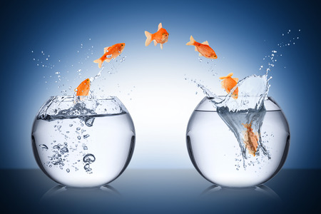 thinkers: fish change concept