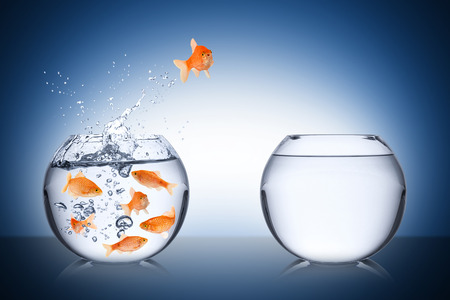 business change: fish escape cocept Stock Photo
