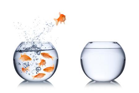 cocept di fuga dei pesci