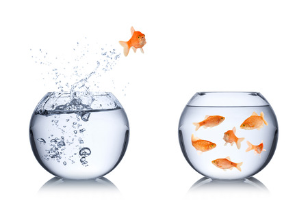 salvation: fish return concept
