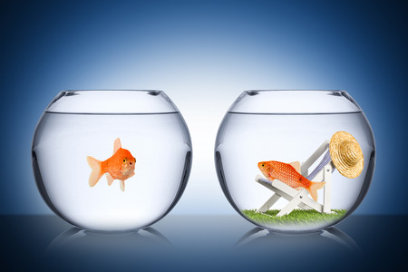 Concept de poissons de vacances Banque d'images - 26584468